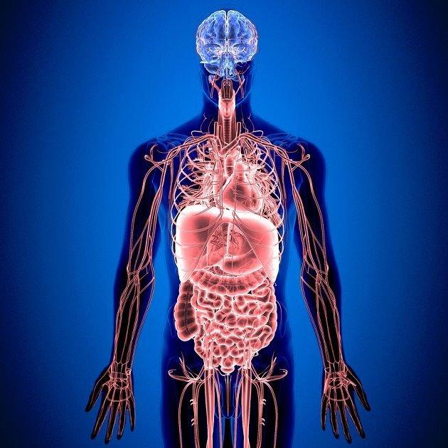 Sistema Nervioso Entérico: Estructura, Funciones y Trastornos